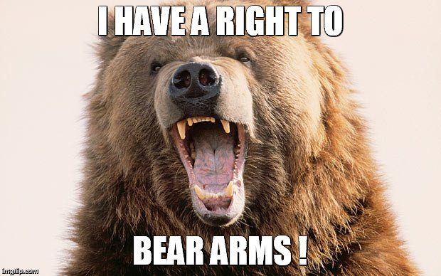 Beary funny! | I HAVE A RIGHT TO BEAR ARMS ! | image tagged in beary funny | made w/ Imgflip meme maker