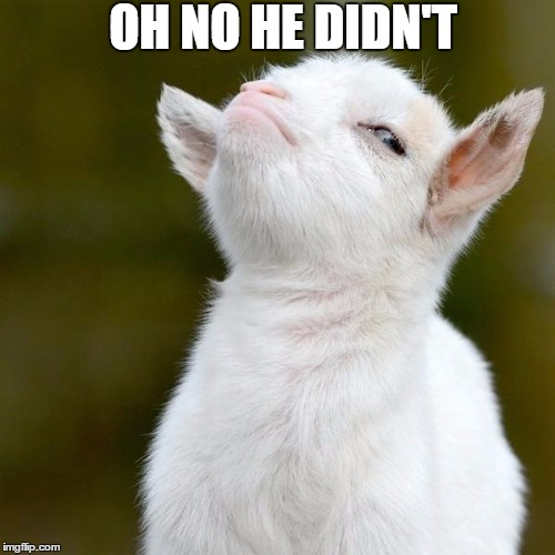 OH NO HE DIDN'T | image tagged in goats | made w/ Imgflip meme maker