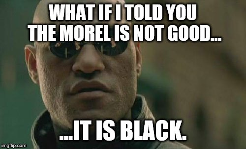 Matrix Morpheus Meme | WHAT IF I TOLD YOU THE MOREL IS NOT GOOD... ...IT IS BLACK. | image tagged in memes,matrix morpheus | made w/ Imgflip meme maker
