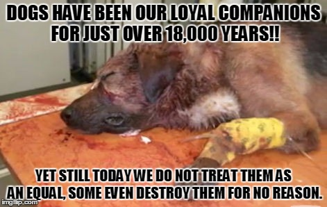 Loyal companions | DOGS HAVE BEEN OUR LOYAL COMPANIONS FOR JUST OVER 18,000 YEARS!! YET STILL TODAY WE DO NOT TREAT THEM AS AN EQUAL, SOME EVEN DESTROY THEM FO | image tagged in cruelty,dog,dogs,human rights,love,hate | made w/ Imgflip meme maker