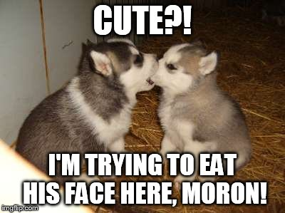 Cute Puppies | CUTE?! I'M TRYING TO EAT HIS FACE HERE, MORON! | image tagged in memes,cute puppies | made w/ Imgflip meme maker