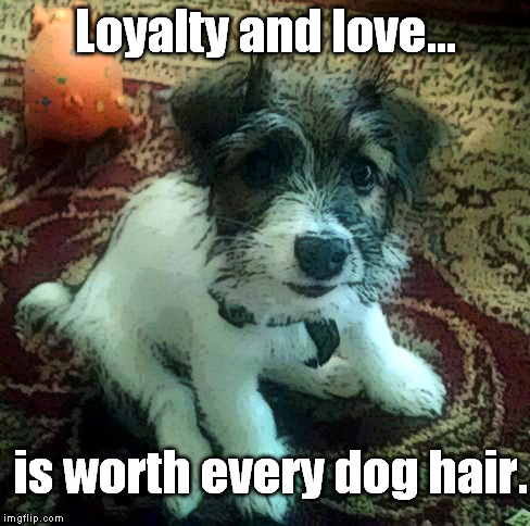 Loyalty and love. | Loyalty and love... is worth every dog hair. | image tagged in dog,loyal,love,jack russell terrier | made w/ Imgflip meme maker