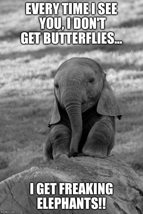 Elephant  | EVERY TIME I SEE YOU, I DON'T GET BUTTERFLIES... I GET FREAKING ELEPHANTS!! | image tagged in elephant | made w/ Imgflip meme maker