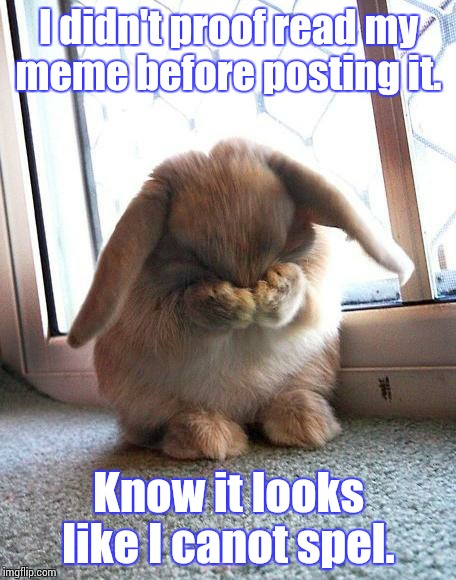 embarrassed bunny | I didn't proof read my meme before posting it. Know it looks like I canot spel. | image tagged in embarrassed bunny | made w/ Imgflip meme maker
