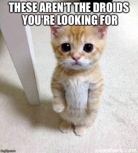 orjzf cute cat meme imgflip