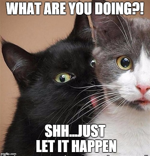Cats licking  | WHAT ARE YOU DOING?! SHH...JUST LET IT HAPPEN | image tagged in funny cats | made w/ Imgflip meme maker