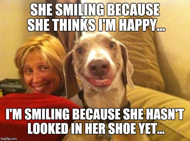 Dog smiling meme - photo#27
