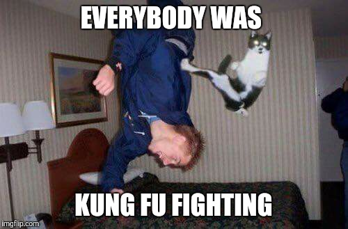 EVERYBODY WAS KUNG FU FIGHTING | image tagged in cat,kung fu | made w/ Imgflip meme maker