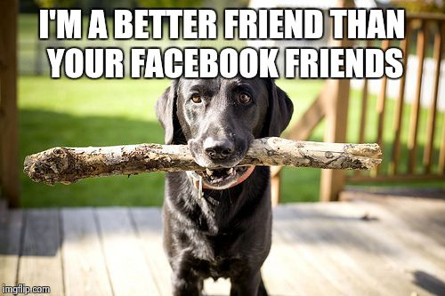 I'M A BETTER FRIEND THAN YOUR FACEBOOK FRIENDS | image tagged in sad dog,facebook | made w/ Imgflip meme maker
