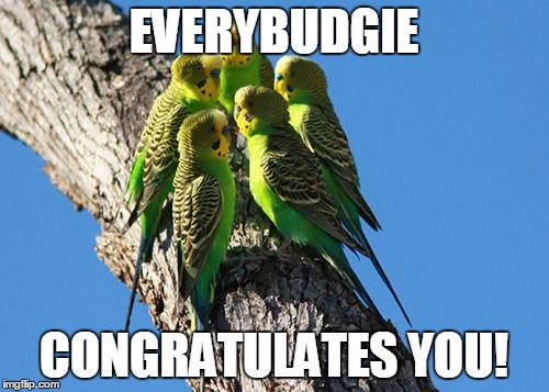 The Meeting | EVERYBUDGIE CONGRATULATES YOU! | image tagged in the meeting | made w/ Imgflip meme maker