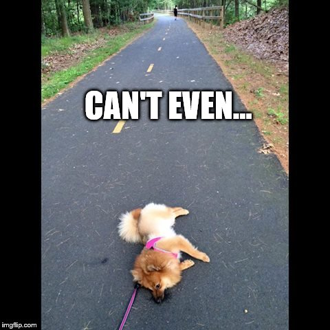 Can't Even | CAN'T EVEN... | image tagged in can't even | made w/ Imgflip meme maker