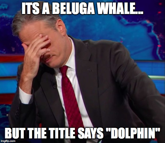 "Jon Stewart Face-palm | ITS A BELUGA WHALE... BUT THE TITLE SAYS ""DOLPHIN"" 