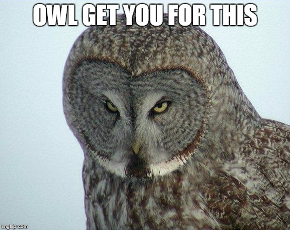 Owl Pun | OWL GET YOU FOR THIS | image tagged in angry owl,puns,memes,funny,owls | made w/ Imgflip meme maker