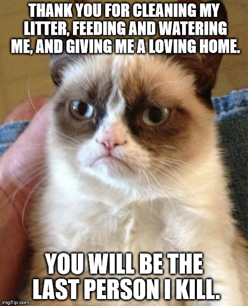 I know a cat like this... | THANK YOU FOR CLEANING MY LITTER, FEEDING AND WATERING ME, AND GIVING ME A LOVING HOME. YOU WILL BE THE LAST PERSON I KILL. | image tagged in memes,grumpy cat,cats,shawnljohnson | made w/ Imgflip meme maker