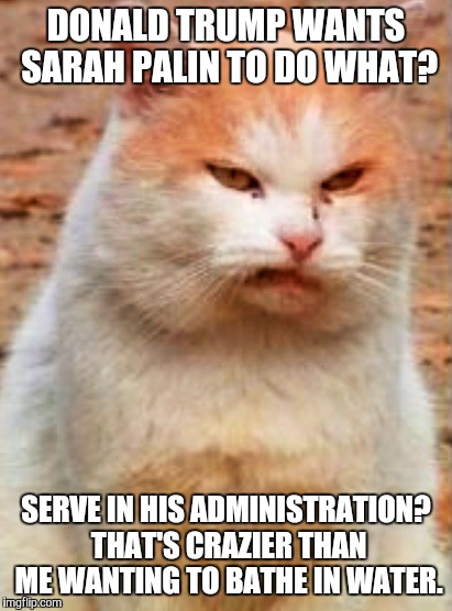 Image Tagged In Donald Trumpcat Imgflip