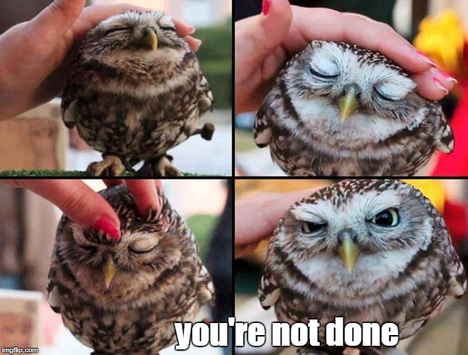 you're not done | image tagged in owl,petting | made w/ Imgflip meme maker