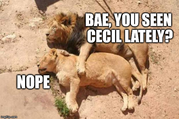 sigh | BAE, YOU SEEN CECIL LATELY? NOPE | image tagged in lions,cecil | made w/ Imgflip meme maker
