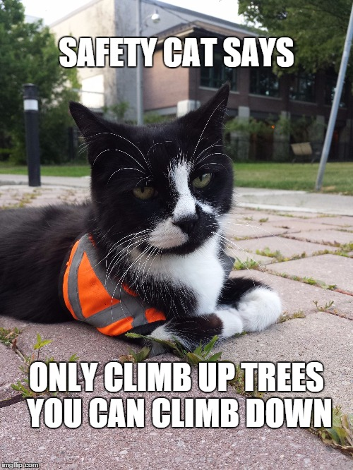 Safety Cat | SAFETY CAT SAYS ONLY CLIMB UP TREES YOU CAN CLIMB DOWN | image tagged in safety cat | made w/ Imgflip meme maker