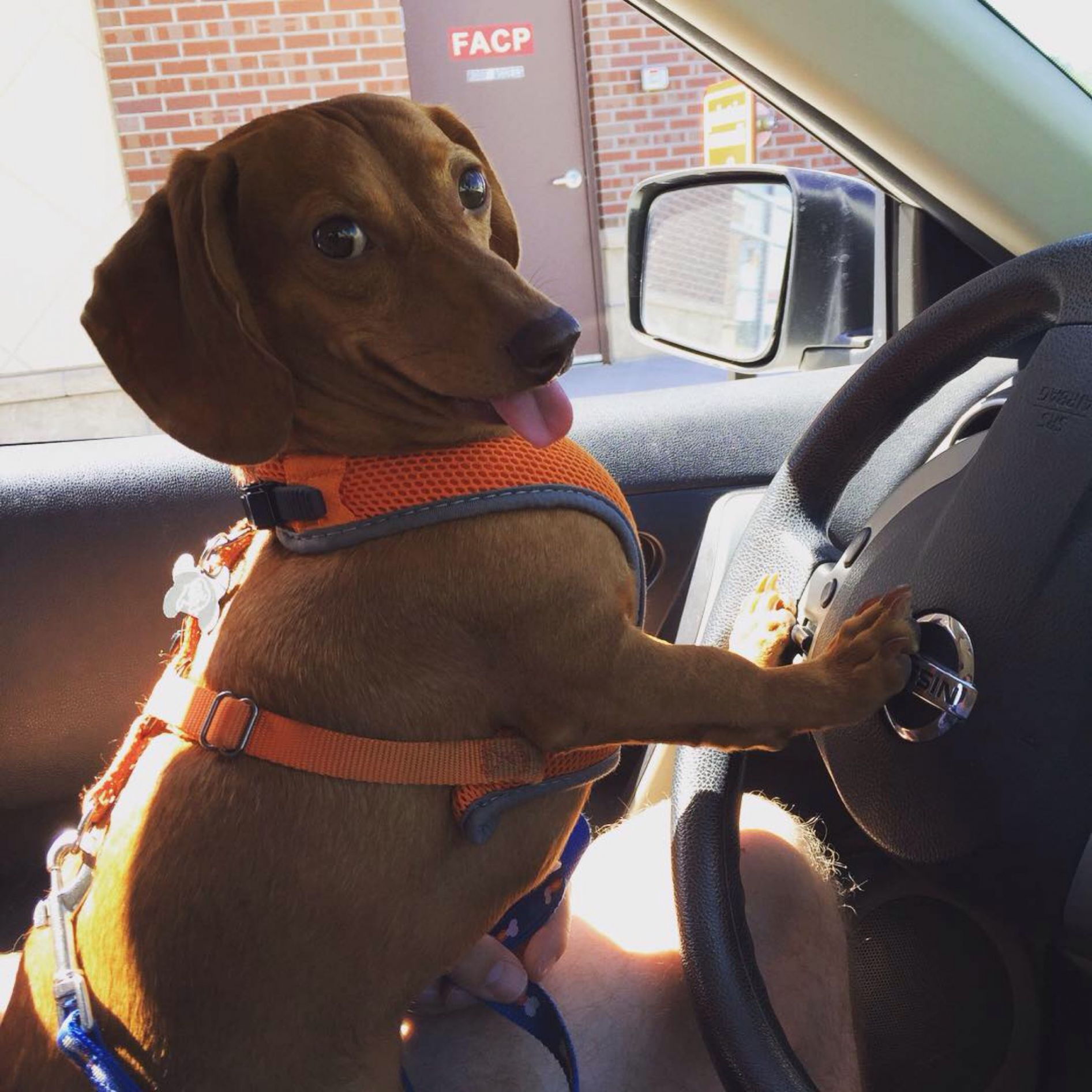 p7fqp wiener dog in car blank template imgflip