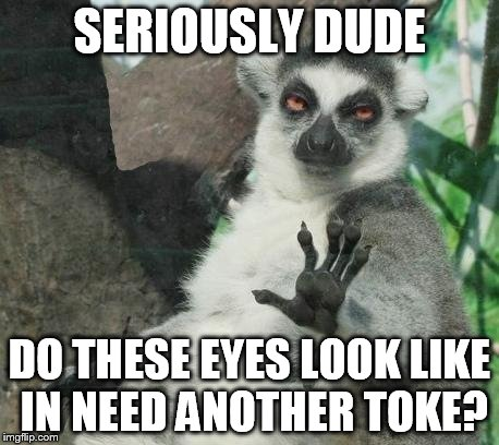 Stoner Lemur | SERIOUSLY DUDE DO THESE EYES LOOK LIKE IN NEED ANOTHER TOKE? | image tagged in memes,stoner lemur | made w/ Imgflip meme maker