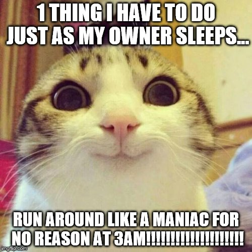 Smiling Cat Meme | 1 THING I HAVE TO DO JUST AS MY OWNER SLEEPS... RUN AROUND LIKE A MANIAC FOR NO REASON AT 3AM!!!!!!!!!!!!!!!!!!!! | image tagged in memes,smiling cat | made w/ Imgflip meme maker
