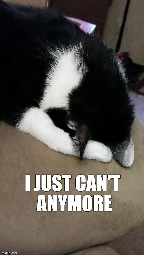 pefyk i give up cat imgflip
