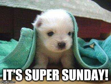 Cute puppy | IT'S SUPER SUNDAY! | image tagged in cute puppy | made w/ Imgflip meme maker