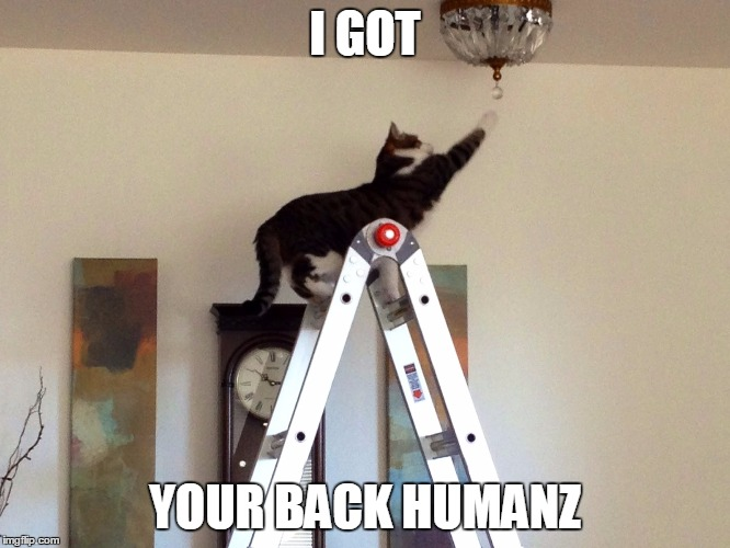 I GOT YOUR BACK HUMANZ | image tagged in cat changing bulb | made w/ Imgflip meme maker