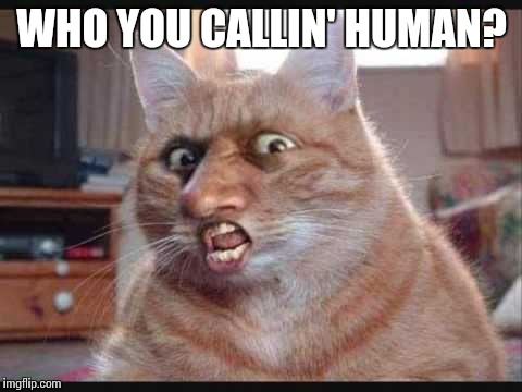 Furry | WHO YOU CALLIN' HUMAN? | image tagged in furry | made w/ Imgflip meme maker