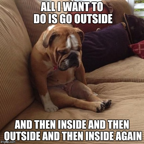 bulldogsad | ALL I WANT TO DO IS GO OUTSIDE AND THEN INSIDE AND THEN OUTSIDE AND THEN INSIDE AGAIN | image tagged in bulldogsad | made w/ Imgflip meme maker