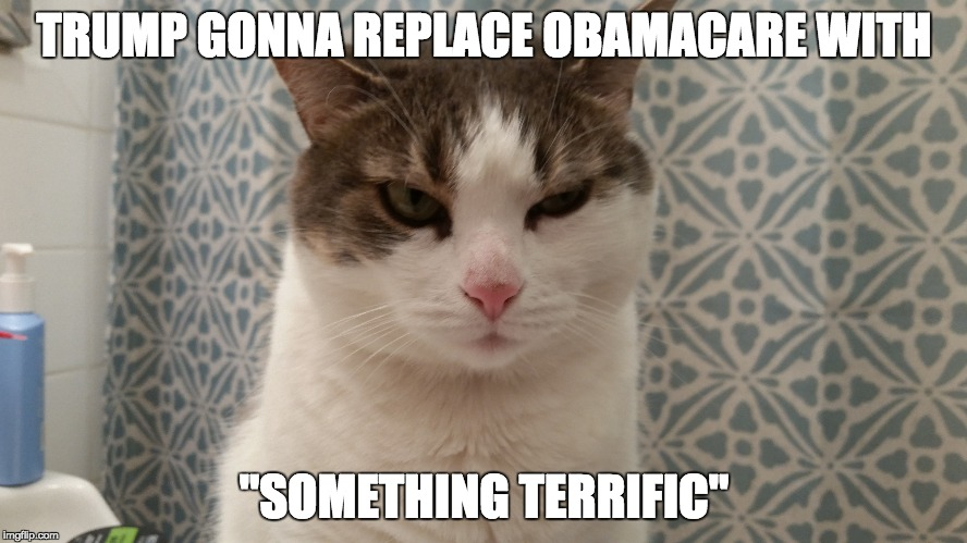"Cat ain't buyin it | TRUMP GONNA REPLACE OBAMACARE WITH ""SOMETHING TERRIFIC"" 