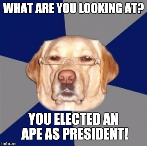 racist dog | WHAT ARE YOU LOOKING AT? YOU ELECTED AN APE AS PRESIDENT! | image tagged in racist dog | made w/ Imgflip meme maker