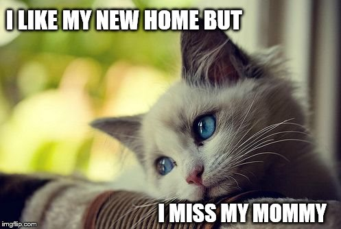Image result for i miss home meme