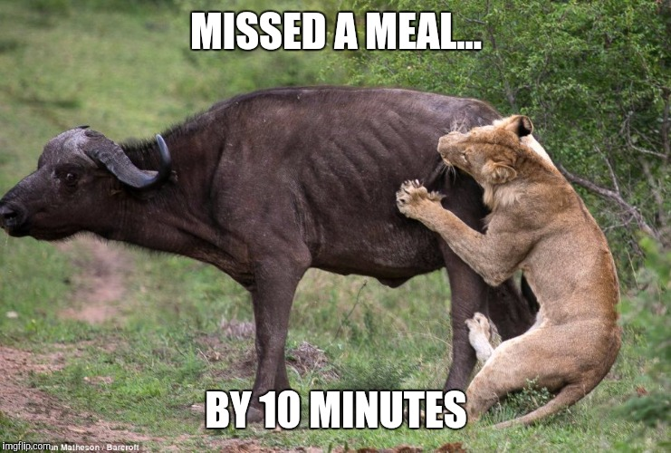 MISSED A MEAL... BY 10 MINUTES | image tagged in hangry,starvation | made w/ Imgflip meme maker