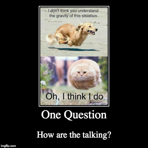 One Question | How are the talking? | image tagged in funny,demotivationals | made w/ Imgflip demotivational maker