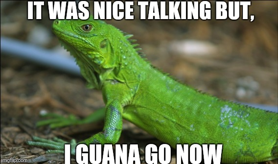 I guana go now | IT WAS NICE TALKING BUT, I GUANA GO NOW | image tagged in funny animal,puns | made w/ Imgflip meme maker