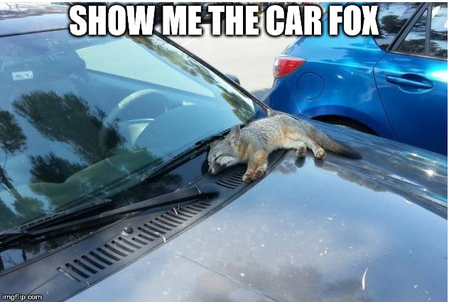Car Fax Parody | SHOW ME THE CAR FOX | image tagged in cars fox car fax paordy | made w/ Imgflip meme maker