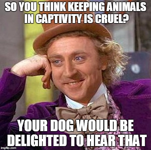 Creepy Condescending Wonka Meme | SO YOU THINK KEEPING ANIMALS IN CAPTIVITY IS CRUEL? YOUR DOG WOULD BE DELIGHTED TO HEAR THAT | image tagged in memes,creepy condescending wonka | made w/ Imgflip meme maker