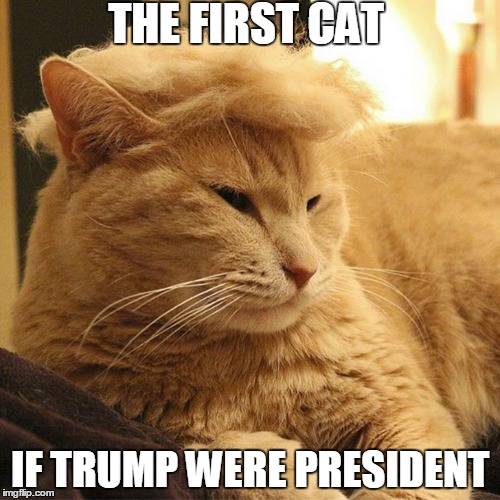 Donald Trump's Cat | THE FIRST CAT IF TRUMP WERE PRESIDENT | image tagged in memes,funny memes,donald trump,cats,politicians,president 2016 | made w/ Imgflip meme maker