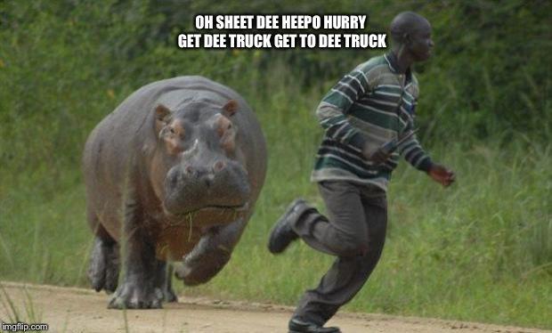 hippo chase - Imgflip Hippopotamus Eating People