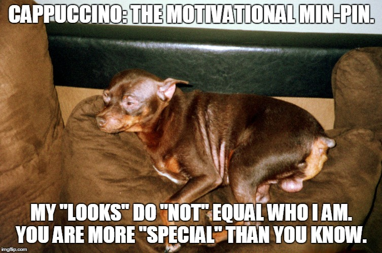 Funny Motivational Meme : The funniest demotivational posters quotes and memes to share