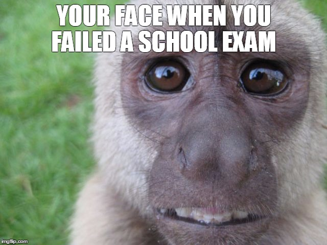 When you failed a school exam | YOUR FACE WHEN YOU FAILED A SCHOOL EXAM | image tagged in school,exam,failed,monkey,scared | made w/ Imgflip meme maker