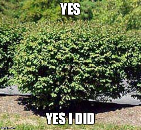 YES YES I DID | image tagged in bush | made w/ Imgflip meme maker