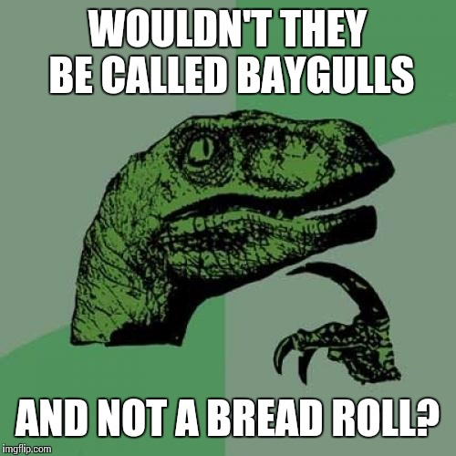 Philosoraptor Meme | WOULDN'T THEY BE CALLED BAYGULLS AND NOT A BREAD ROLL? | image tagged in memes,philosoraptor | made w/ Imgflip meme maker