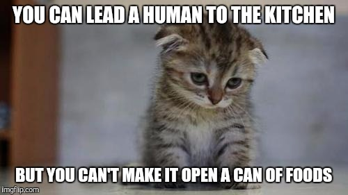 Sad kitten | YOU CAN LEAD A HUMAN TO THE KITCHEN BUT YOU CAN'T MAKE IT OPEN A CAN OF FOODS | image tagged in sad kitten | made w/ Imgflip meme maker