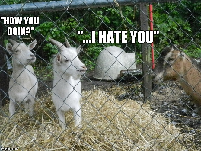 """HOW YOU DOIN?"" ""...I HATE YOU"" 