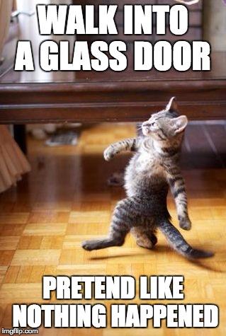 Cat Runs Into Glass Door Cute Cat 2018