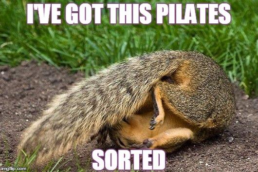 q15sy squirrel pilates imgflip