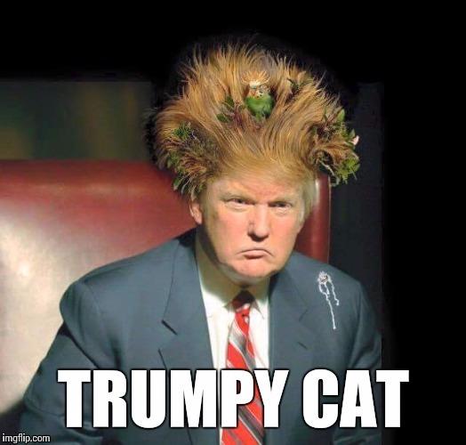 Trumpy Cat Imgflip