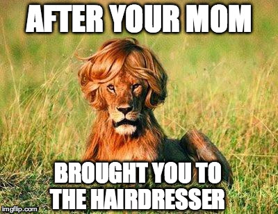 Funny Lion | AFTER YOUR MOM BROUGHT YOU TO THE HAIRDRESSER | image tagged in funny lion | made w/ Imgflip meme maker